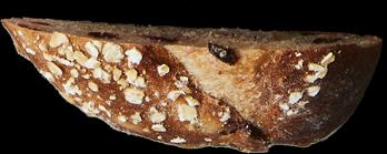tranche de pain 15